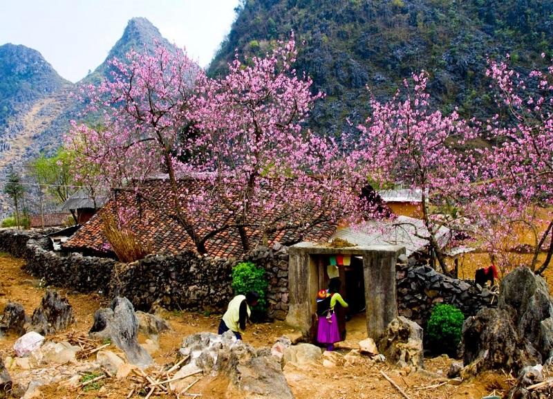 Mùa hoa đào tại Hà Giang