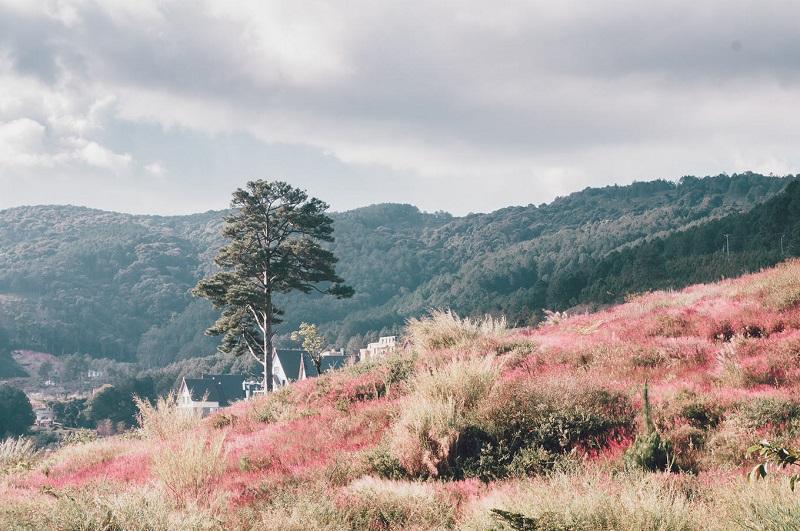 Đồi cỏ màu hồng độc đáo với khung cảnh lãng mạn, nên thơ.
