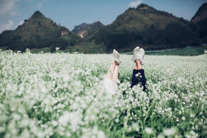 du lịch mộc châu mùa hoa cải