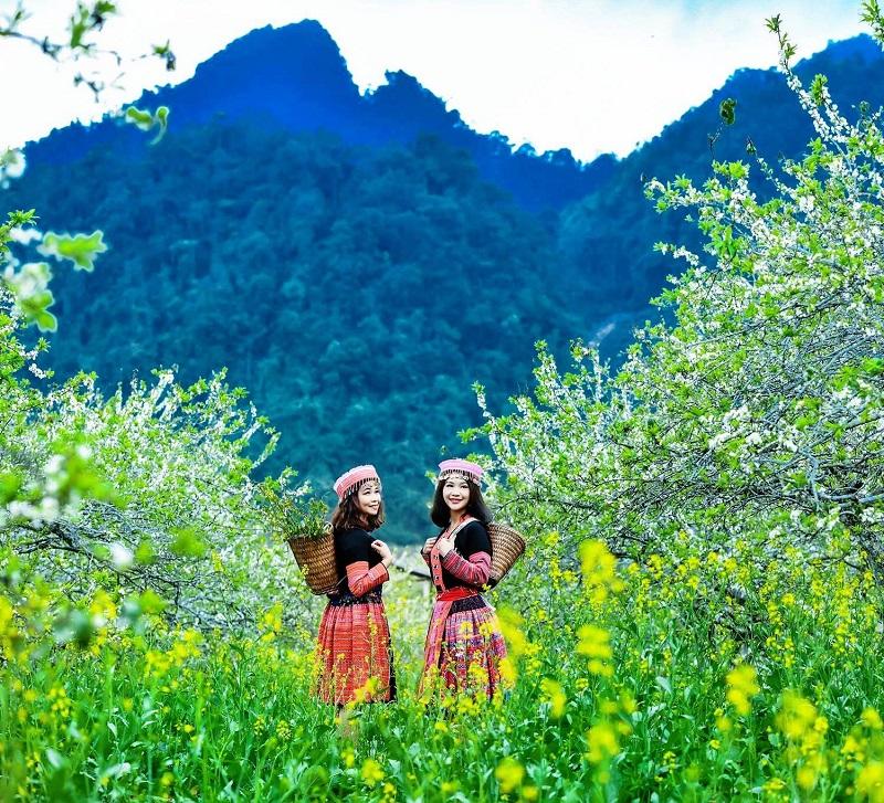 Những cô gái mặc trang phục dân tộc vùng cao giữa rừng hoa Mộc Châu mùa xuân