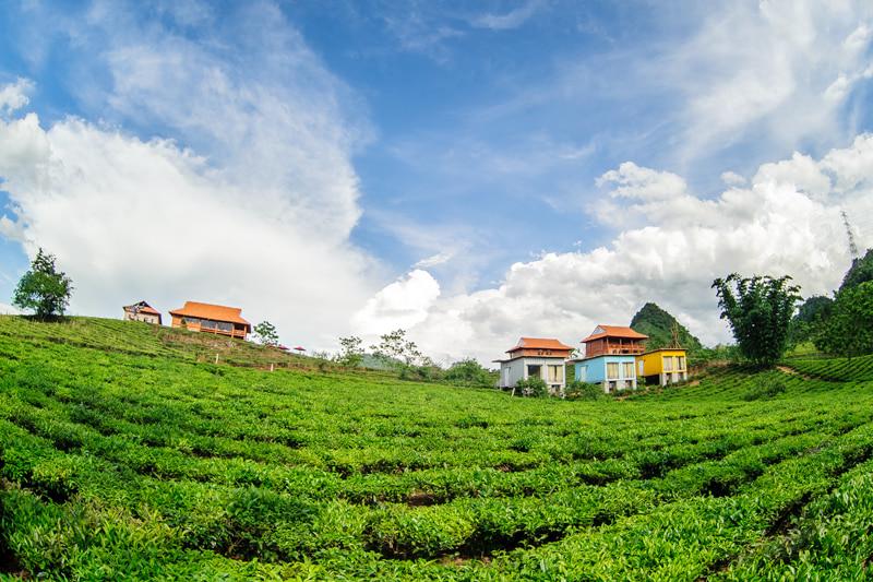 Mộc Châu Arena Village đẹp như một bức tranh trên đồi chè rộng lớn, xanh ngát.