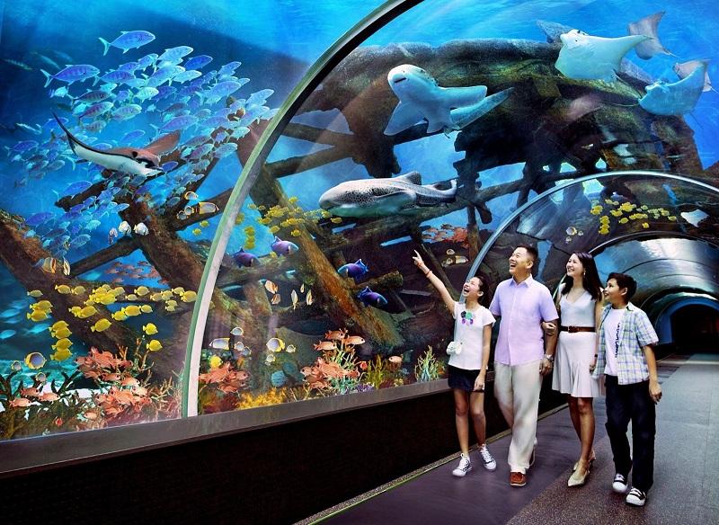 Vinpearl Aquarium là một trong những khu vui chơi trẻ em ở Hà Nội phù hợp cho bạn nhỏ và các gia đình ghé thăm