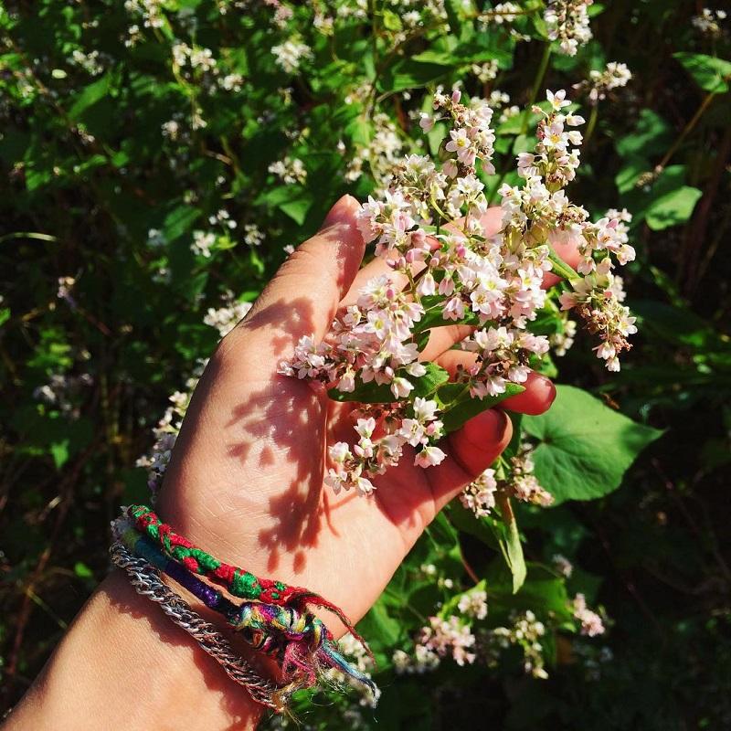 mùa hoa tám giác mạch hà giang