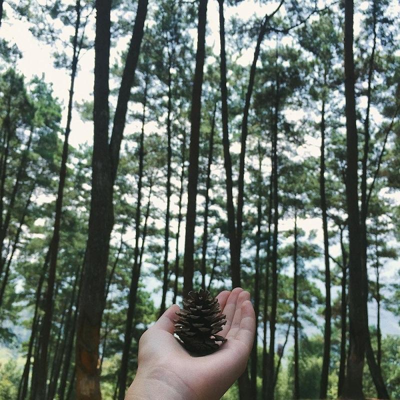 rừng thông yên minh hà giang