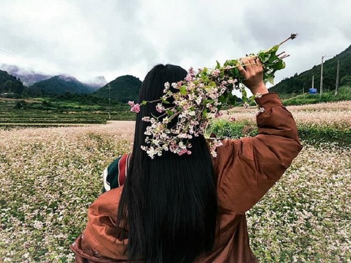 cánh đồng hoa tam giác mạch