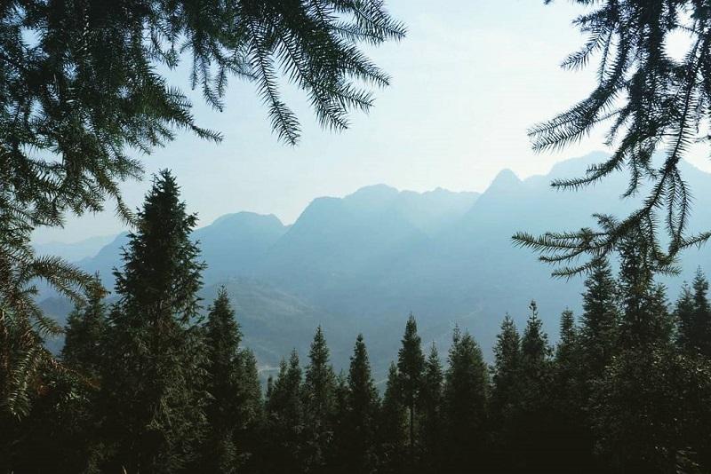 Rừng thông ẩn mình dưới những dãy núi trùng điệp