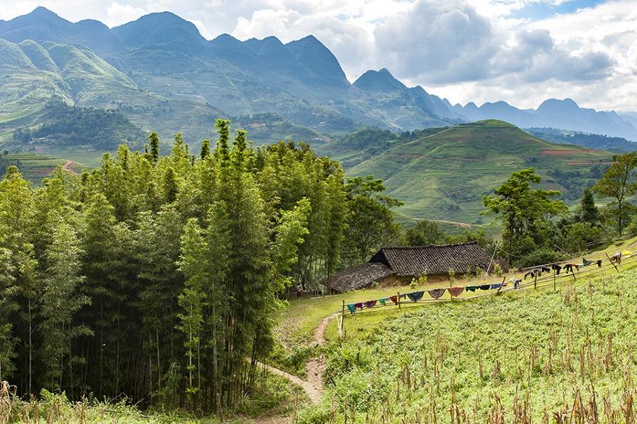 Đường đi vào rừng thông Yên Minh
