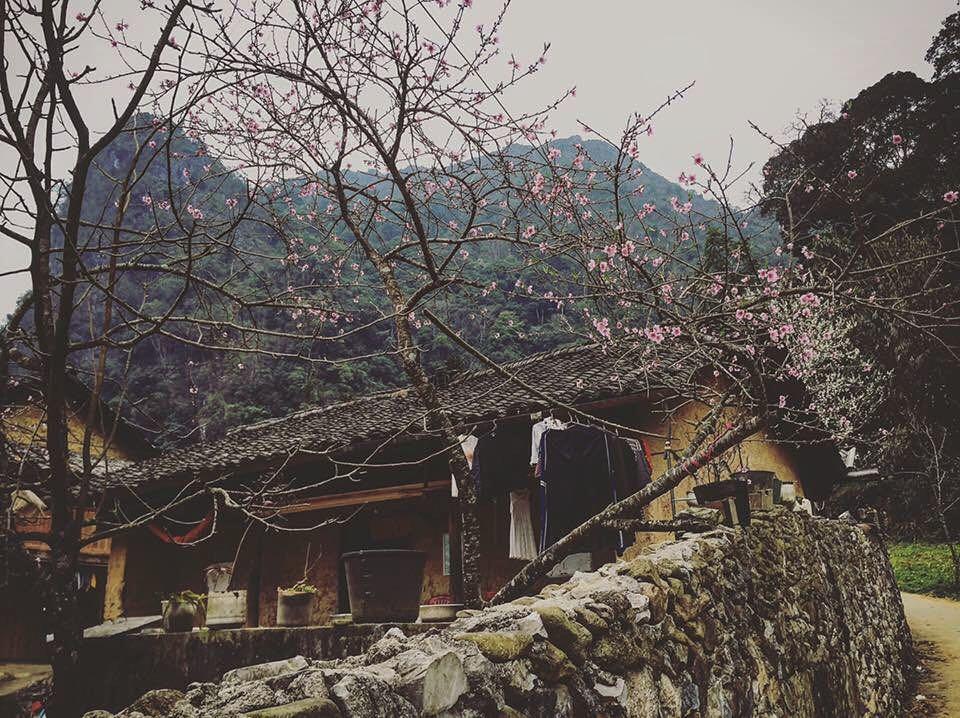 Một căn homestay Hà Giang ngập tràn sắc hồng hoa đào