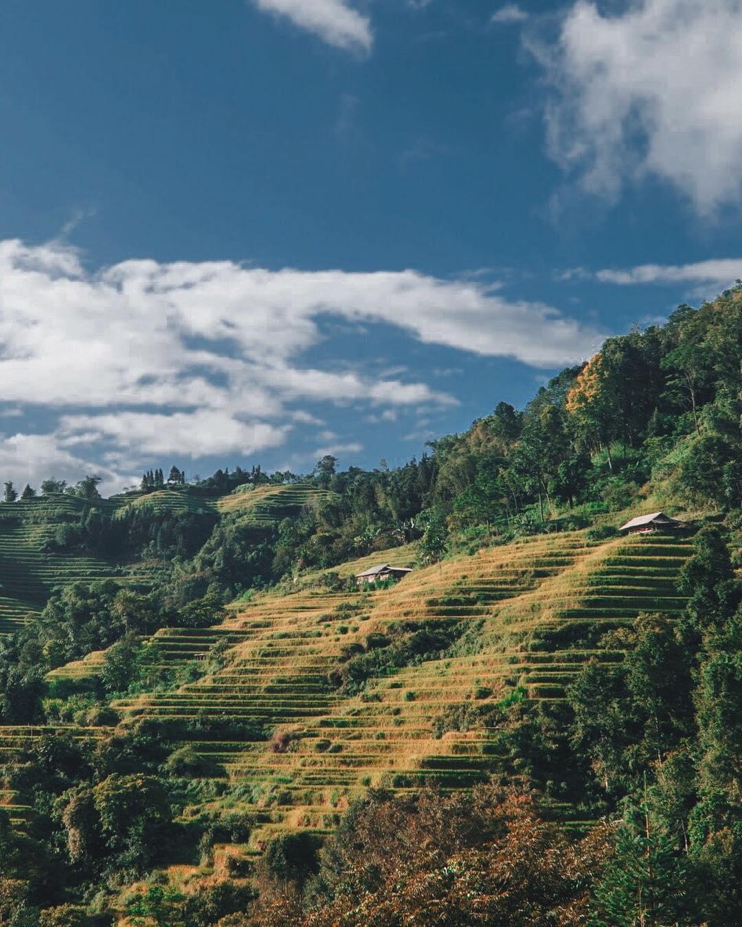 Những cánh đồng ruộng thang thoai thoải vào mùa lúa chín