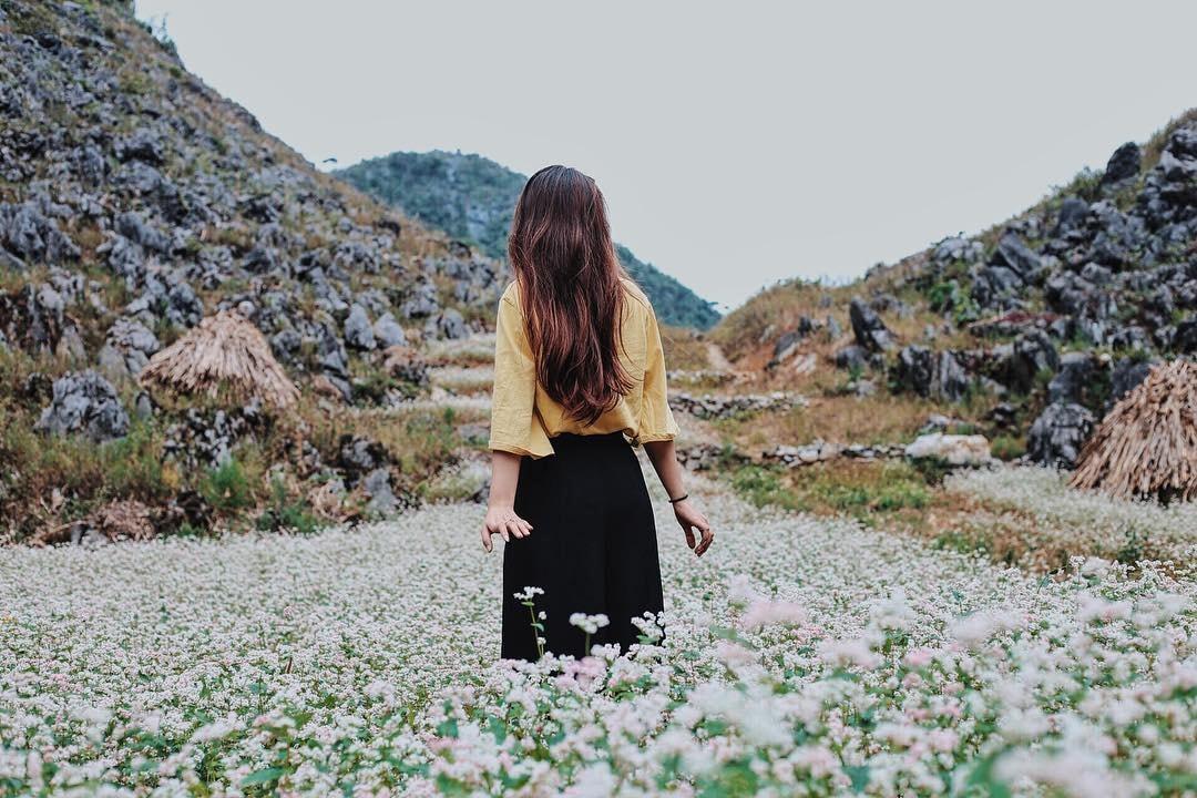 Cô gái chụp hỉnh cánh đồng hoa tam giác mạch hà Giang