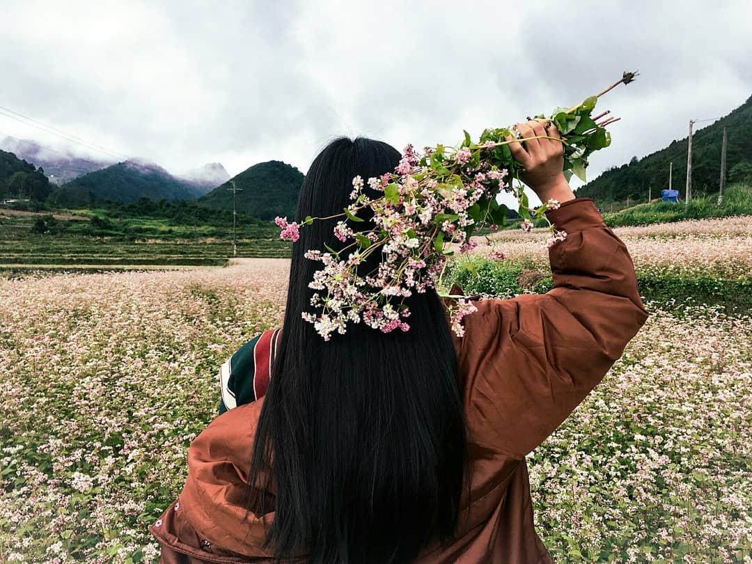 Check in với cánh đồng hoa tam giác mạch