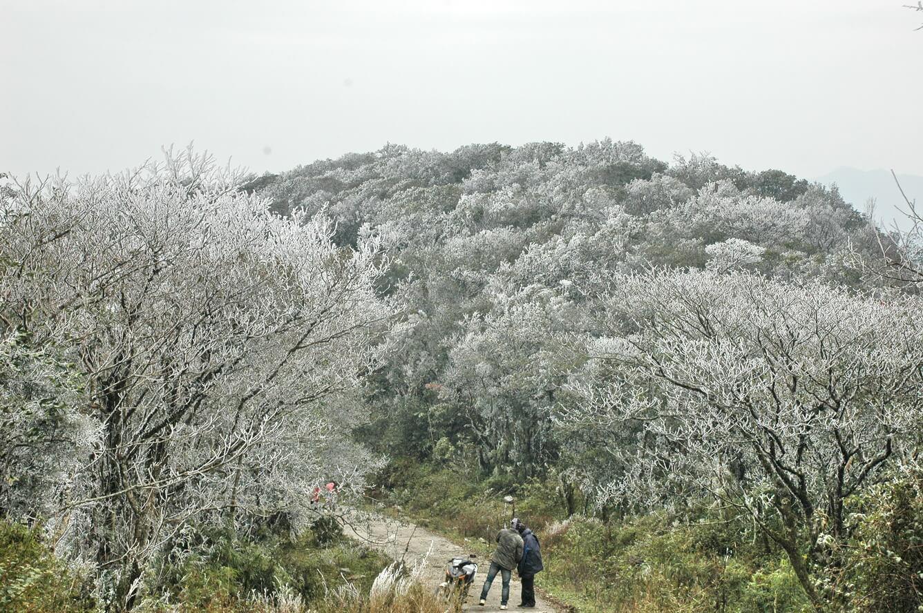 ngập tràn mùa hoa mận trắng hà giang