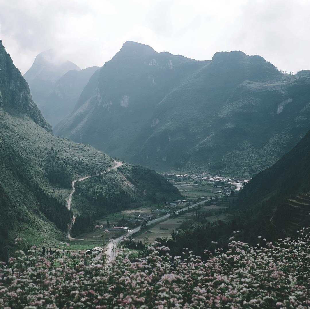 Hoa tam giác mạnh nở rộ trên mọi cung đường Hà Giang