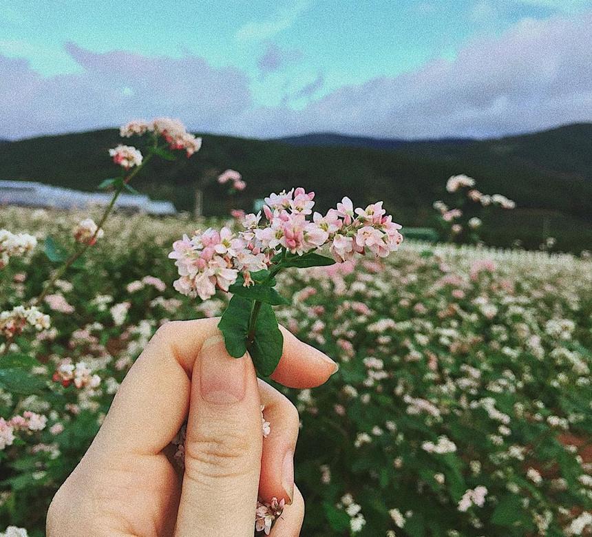 Cầm trên tay bông hoa tam giác mạch