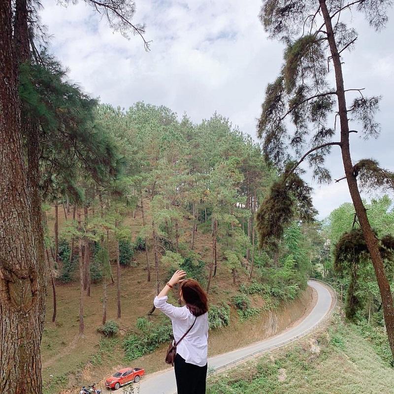 Khu rừng thông Hà Giang