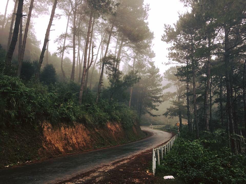 Con đường được bao phủ bởi khu rừng thông