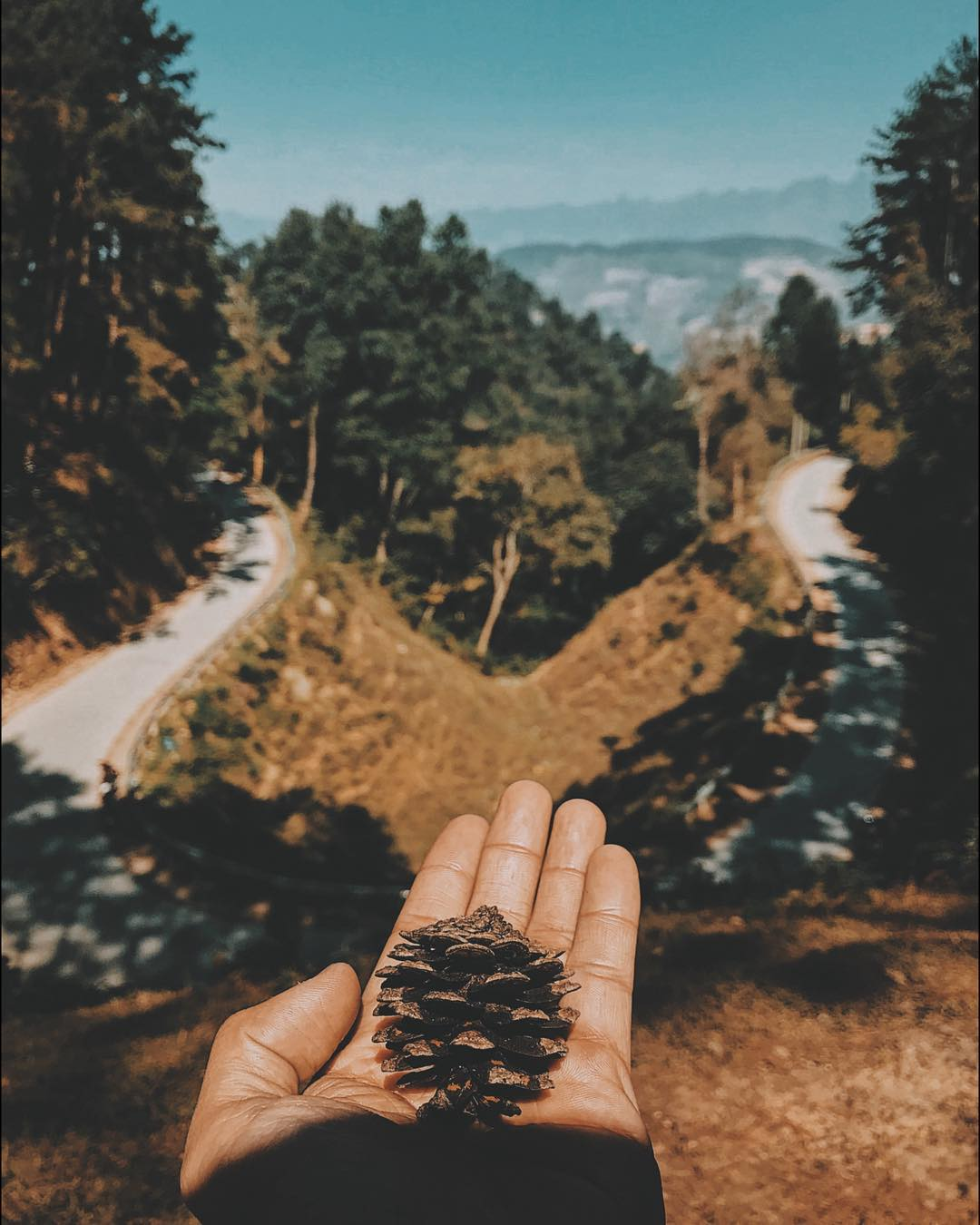 Con đường thông ở hà Giang