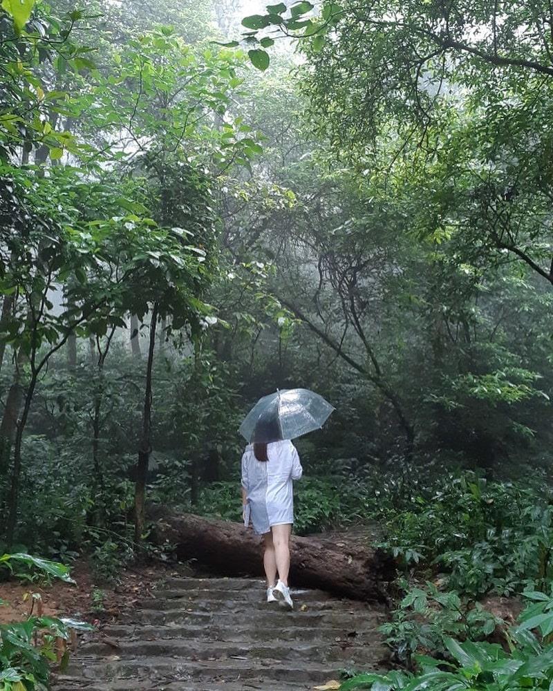 Khung cảnh rừng núi âm u ở VQG Ba Vì