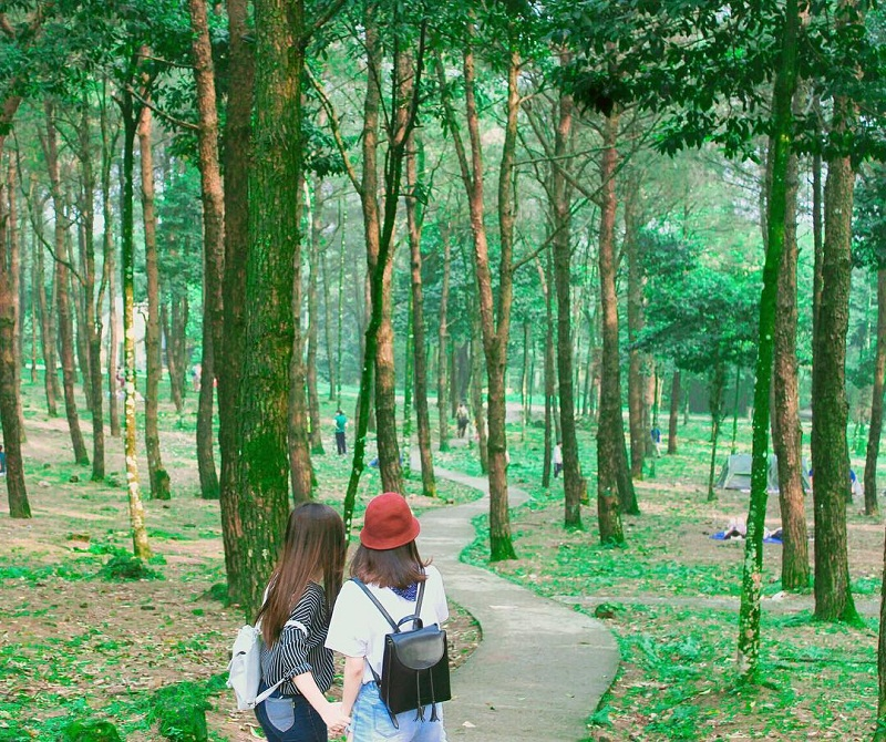 Dạo bước trong rừng cây mát mẻ ở Ba Vì