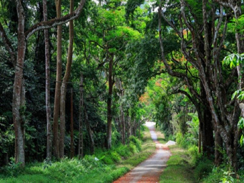 Con đường nhỏ với hàng cây rợp bóng mát ở vườn quốc gia Ba Vì