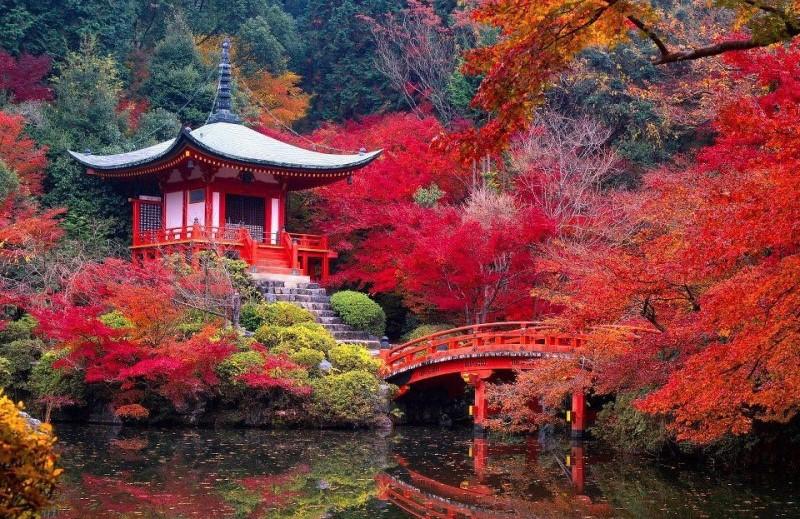 Mùa thu Nhật Bản tràn ngập màu lá phong đỏ