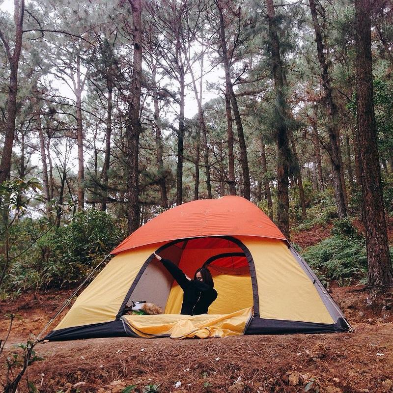 Dựng lều cắm trại ở khu rừng thông Ba Vì