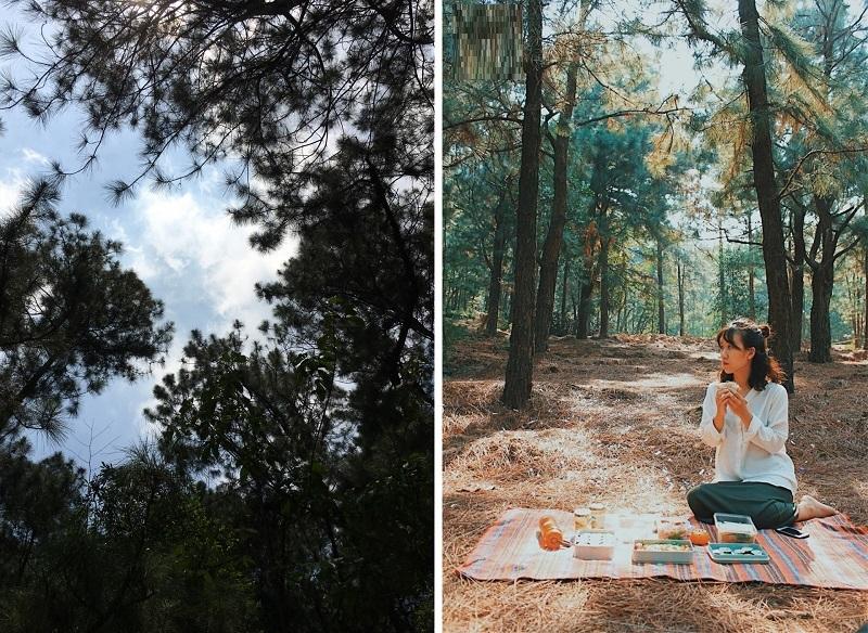 Lựa chọn cắm trại ở khu rừng thông chắc chắn sẽ có nhiều điều thú vị