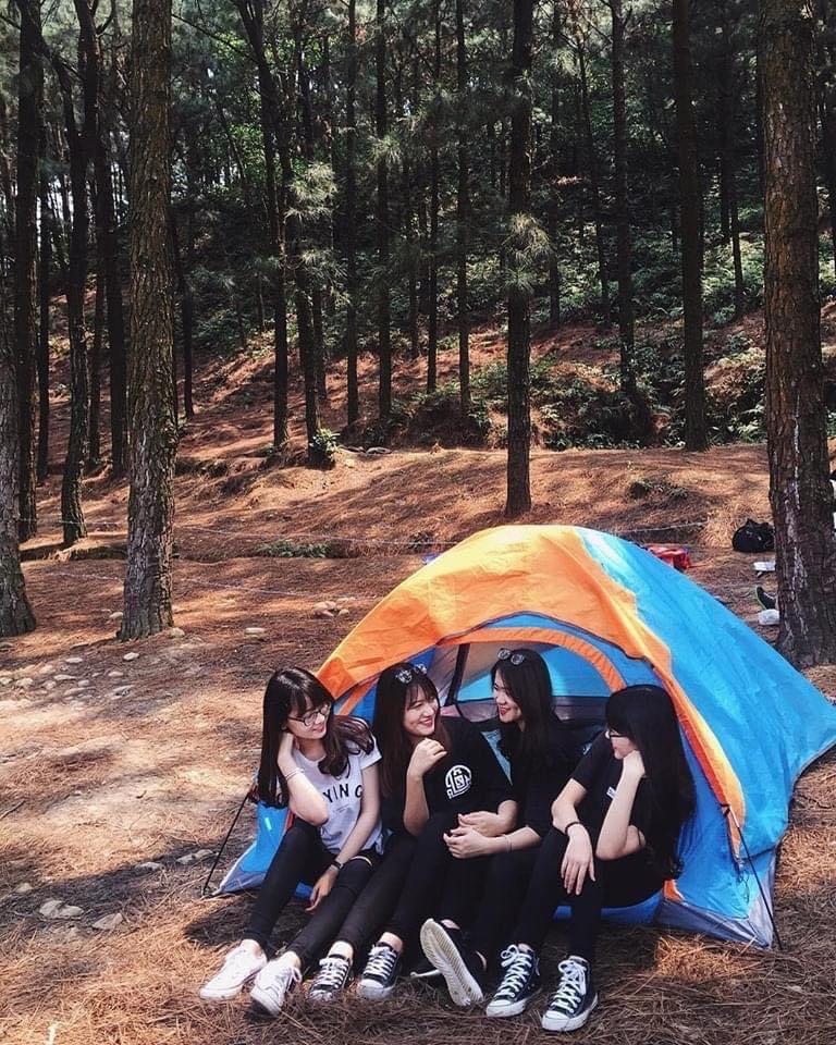 Nhóm 4 bạn gái dựng lều trại ở trong rừng thông