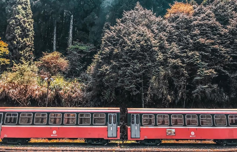 Khám phá núi Alishanbằng tàu hỏa