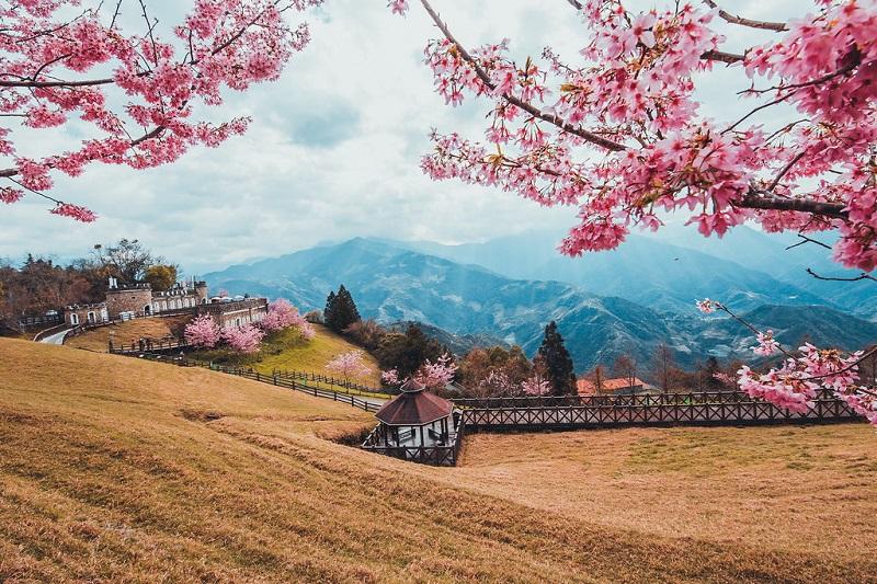 Mùa hoa anh đào nở ở Wuling Farm