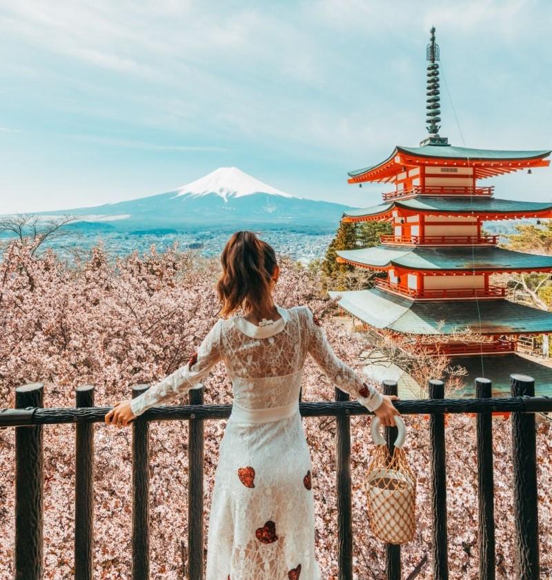 Núi Phú Sĩ mùa hoa anh đào ngập tràn