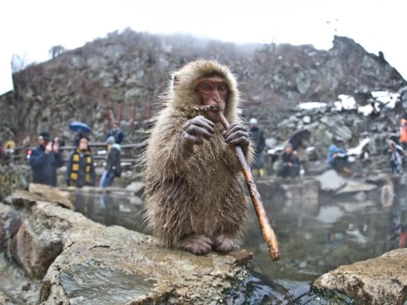 Chú khỉ tại công viên Jigokudani