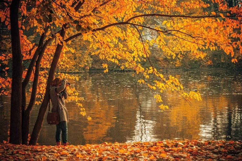 Suối Oirase nhuộm màu rực rỡ trong màu lá của mùa thu