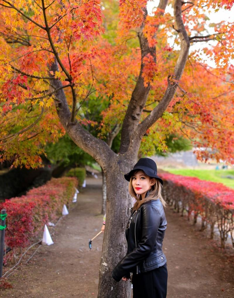 Cô gái chụp hình tại cây phong lá đỏ