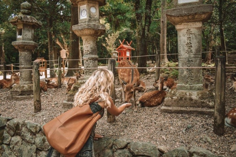 Những chú nai được du khách cho ăn tại công viên thành phố Nara