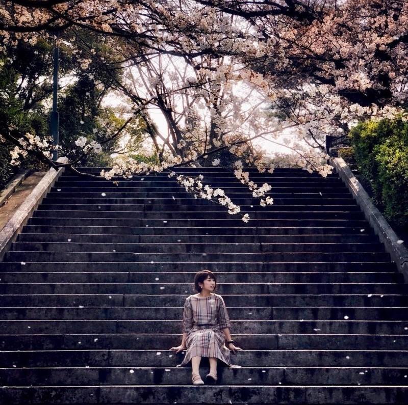 Những bậc thang lên với khung cảnh hoa anh đào ngập tràn