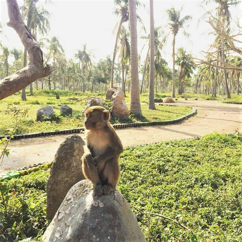 đảo khỉ ở đâu