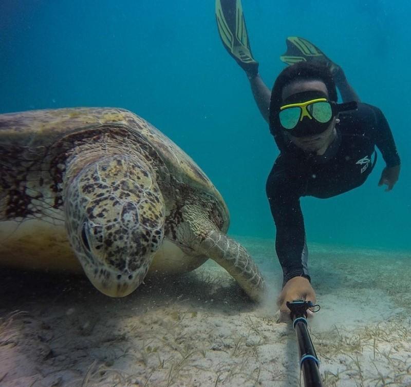 Lặn biển ngắm rùa tại quần đảo Pereaverian