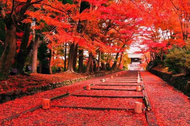Mùa thu Nhật Bản ngập tràn trong sắc đỏ