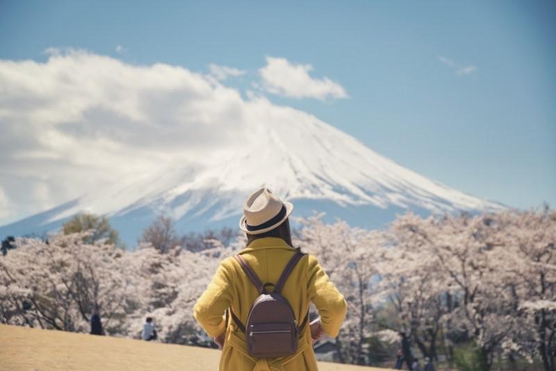 Ngắm đỉnh núi Phú Sĩ mùa hoa anh đào