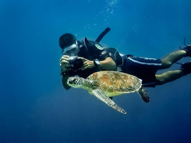 Lặn ngắm rùa ở Borneo