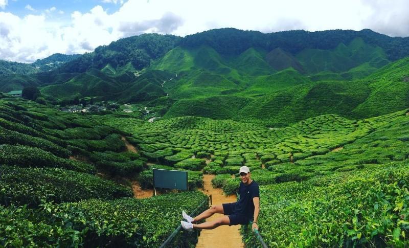 Đồn điền trà mênh mông của khu vực cao nguyên Malaysia