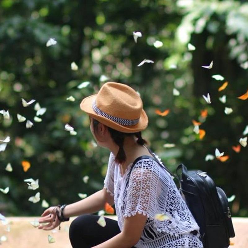 Mùa bướm rừng Cúc Phương