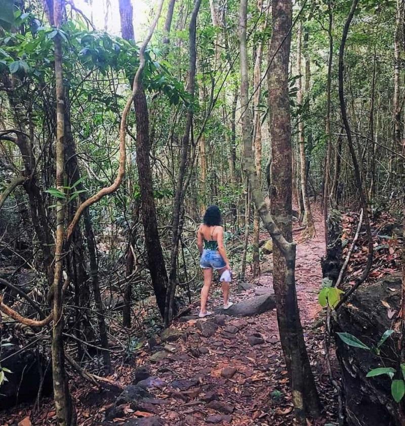 Đi bộ trong rừng Cúc Phương