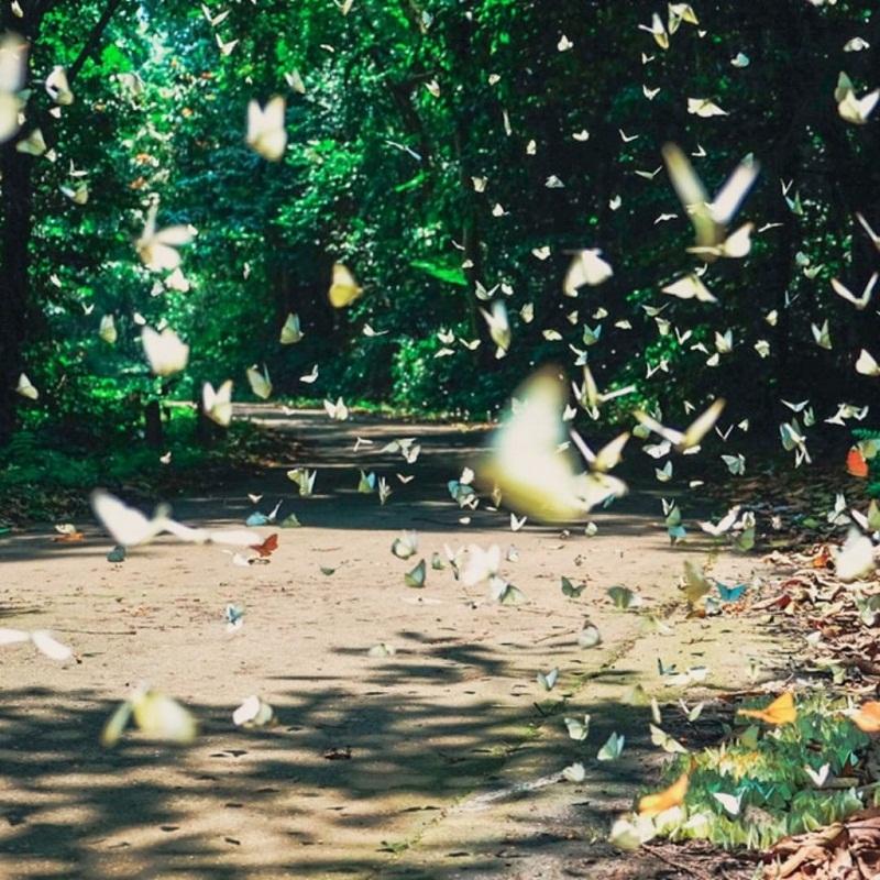 Những cánh bướm rập rờn với nhiều màu sắc