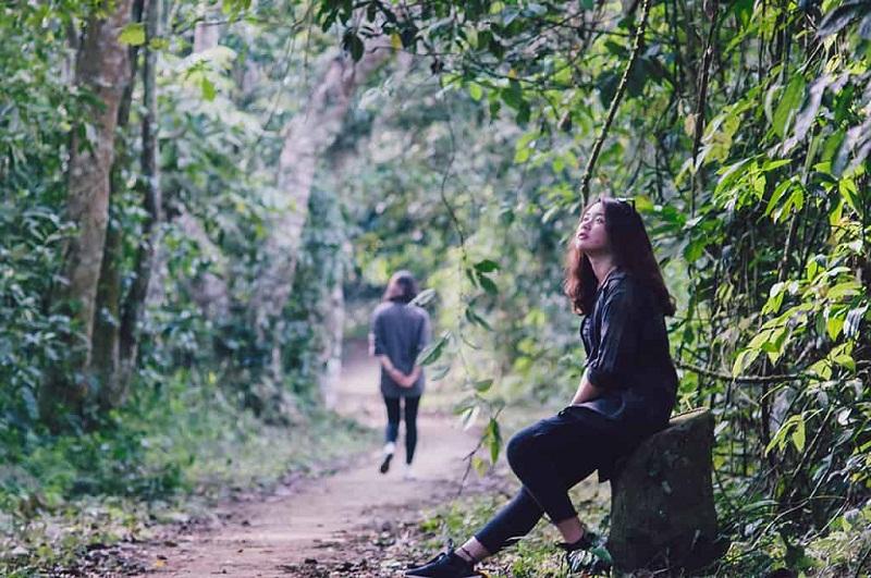 Khung cảnh trong lành tại rừng Cúc Phương