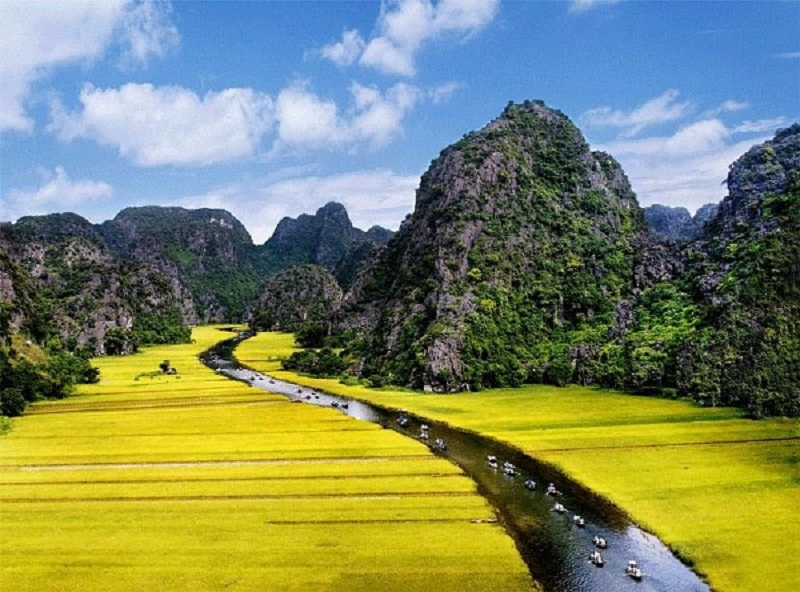 Cánh đồng lúa chín vàng uốn lượn bên những dãy núi đá