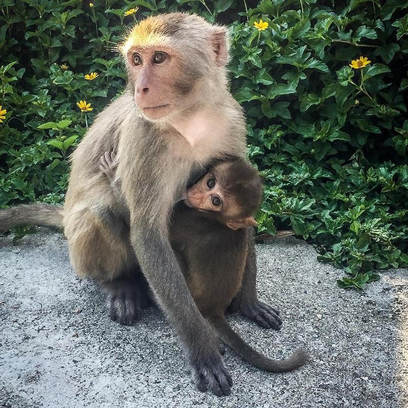 vé đảo khỉ nha trang