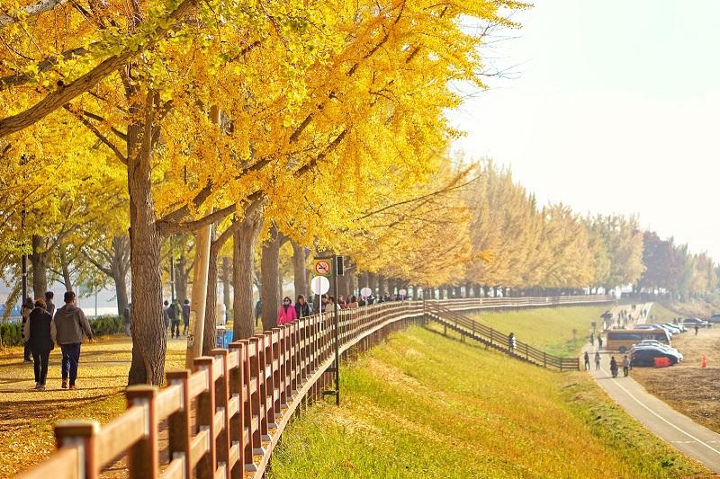 Những hàng cây ở hai bên đường với những tán lá phủ vào nhau