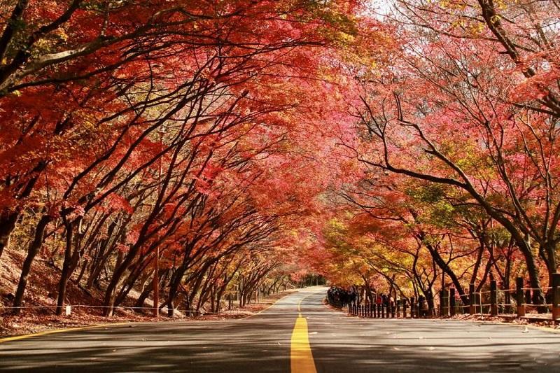Vườn quốc gia Naejangsan trong sắc đỏ của lá phong